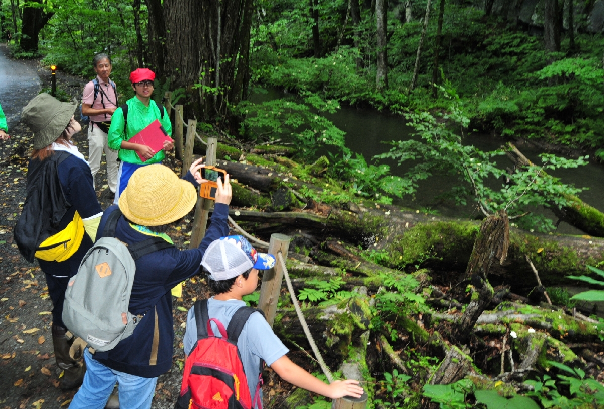 高校生ガイドの案内を受けながら奥入瀬渓流の散策を楽しむ来訪者=24日、十和田市