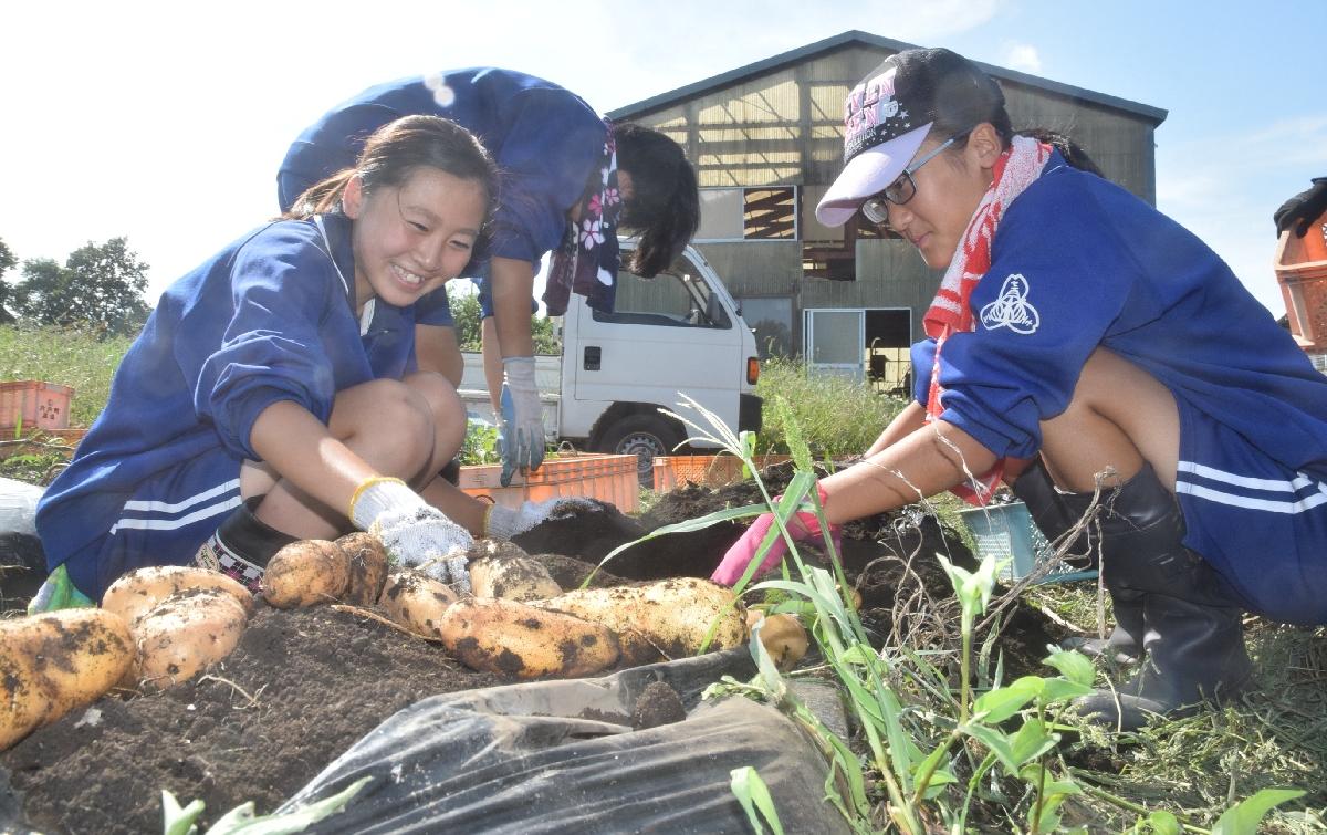 ジャガイモの収穫を体験する生徒