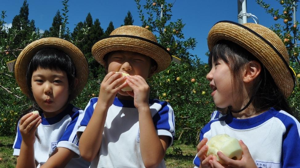 皮をむいたリンゴにかぶりつく園児