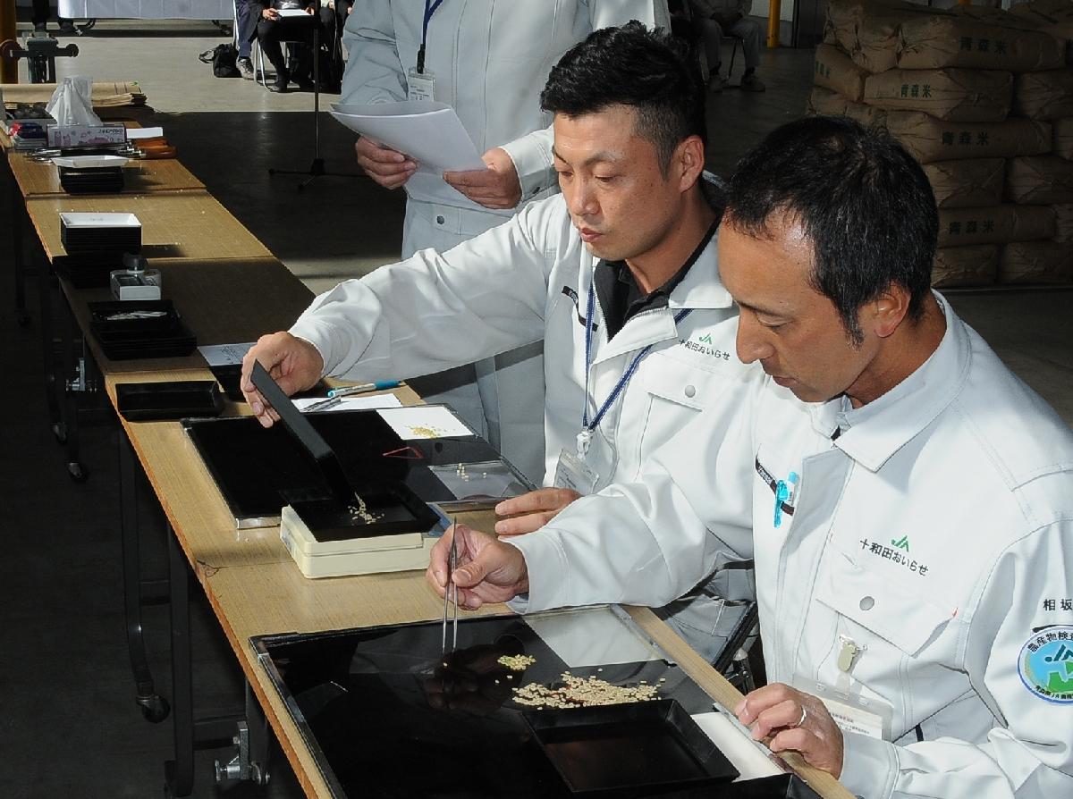 全量が1等米と格付けされた2019年産米の初検査=20日、十和田市