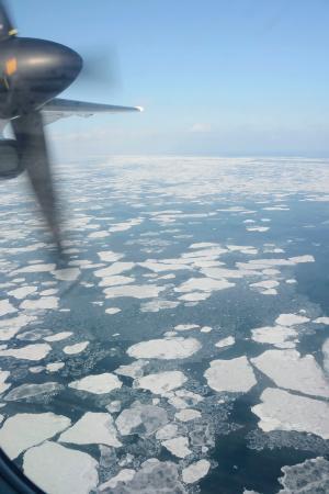 オホーツク海に広がる流氷=16日(第1管区海上保安本部の航空機から)